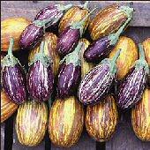http://www.reimerseeds.com/images/products/eggplant/Udumalapet_Eggplants_Seeds.jpg
