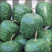 Apple Gourds (Large) GD18-10_Base