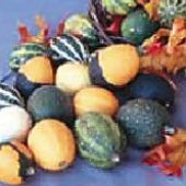 Goblin Eggs Gourds (Mixed) GD47-10