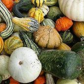 Mixed Gourds (Large) GD10-10_Base