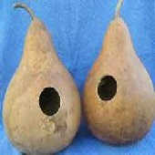 Martin Birdhouse Gourds GD49-10_Base