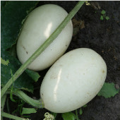 Nest Egg Gourds GD13-10