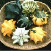 Shenot Crown of Thorns Gourds GD20-10