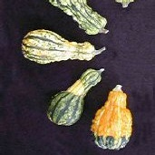 Small Warted Gourds GD15-10_Base