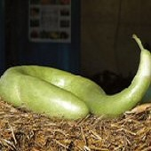 Snake Gourds GD29-10_Base