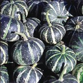 Striped Pear Gourds GD17-10_Base