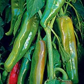 Anaheim Hot Peppers HP302-20_Base