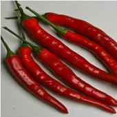 Cayenne Long Thin Hot Peppers HP2000-20_Base