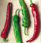 Cheyenne Hot Peppers HP1993-10_Base