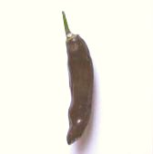 Ethiopian Hot Peppers HP687-10_Base