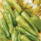 Golden Greek Pepperoncini Hot Peppers HP463-20