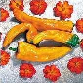 Golden Treasure Hot Peppers HP1998-20
