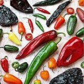 Hot Pepper Mix HP1297-20