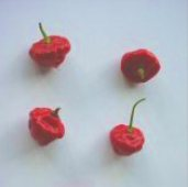 Habanero Hot Peppers (Sweet) HP1697-10