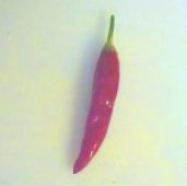 Jamaican Cayenne Hot Pepper HP130-20