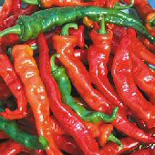 Maule's Red Hot - Hot Pepper HP1957-20_Base