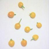 Quintisho Hot Peppers (Yellow) HP196-20