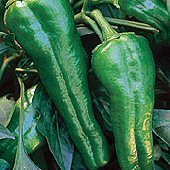 Relleno Hot Peppers HP1195-10