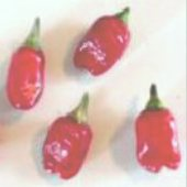 Trifetti Hot Peppers HP1029-10