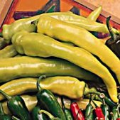 Yellow Cayenne Hot Pepper HP262-10