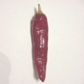 Zambian Hot Pepper HP1067-20