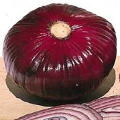 Giant Red Hamburger Onions ON9-50_Base
