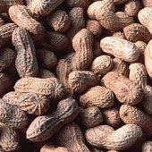 Improved Virginia Peanuts PN3-20