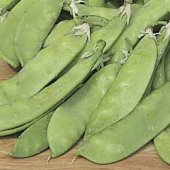 Dwarf Grey Sugar Snow Peas PE10-50_Base