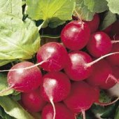 Cherry Belle Radishes RD2-50