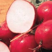 Crimson Giant Radishes RD25-50