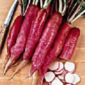 Chinese Winter Radishes (Rose) RD16-50