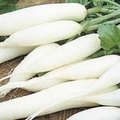White Icicle Radishes RD23-50_Base