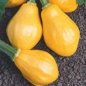 Papaya Pear Squash SQ5-10