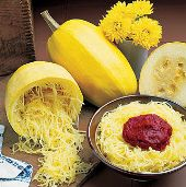 Vegetable Spaghetti Squash SQ18-20