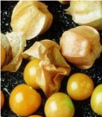 Yellow Husk Ground Cherry TL7-20_Base