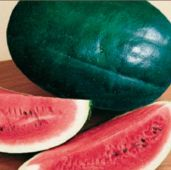 Black Diamond Watermelons WM3-20_Base