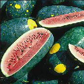 Moon & Stars Watermelons (Cherokee) WM14-20_Base