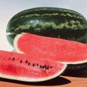 Congo Watermelons WM6-20