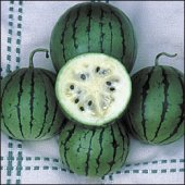Cream of Saskatchewan Watermelons WM25-20_Base