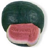 Mountain Hoosier Watermelons WM40-10_Base
