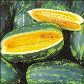 Mountain Sweet Yellow Watermelons WM32-10_Base